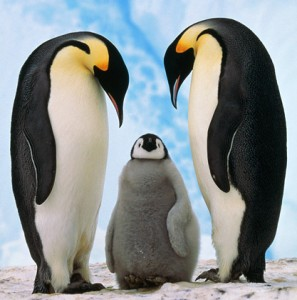 Emperor Penguins, Symbol for Google Penguin Update